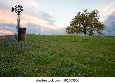 Bluebonnet field with windmill at sunset west Texas