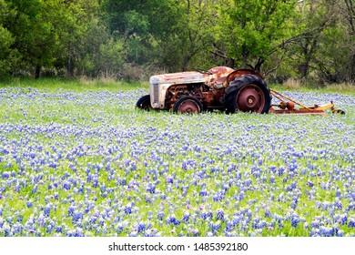 Bluebonnet filled Meadow with a rustic tractoron the Ennis Bluebonnet Trail in Ellis County, Texas.