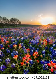 Bluebonnet and Indian paintbrush wildflowers filed in Ennis, Texas