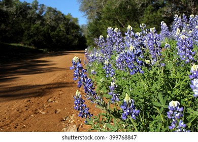 Bluebonnets along a rural dirt road in Texas in the Spring