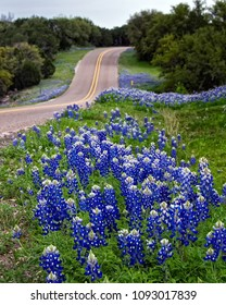 Bluebonnets along a Texas Hill Country Road