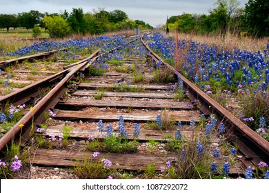 Bluebonnets at the Crossroads - abandoned railroad being overtaken with Texas wildflowers.