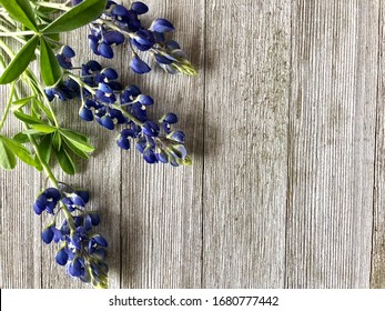 Bluebonnets on a wooden background with copy space