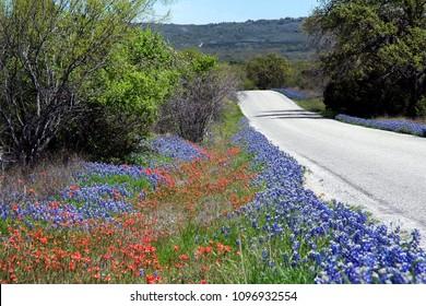 Bluebonnets and Paintbrush along a Texas Gravel Road