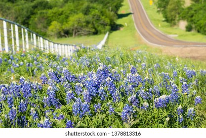 Bluebonnets and yellow wildflowers along the side of the rolling road with white fence in Texas