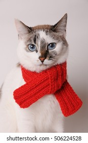 Blue-eyed cat wearing a red knitted scarf on a light background