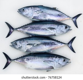 bluefin four tuna fish Thunnus thynnus catch in a row