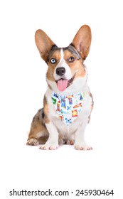 Bluemerle Cardigan Welsh Corgi in bandana with rockets