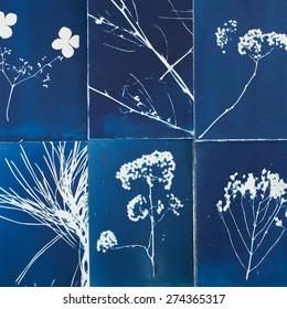 Blueprints of plants