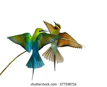 Blue-tailed bee-eater bird isolated on white background