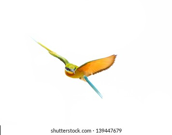 Blue-tailed Bee-eater in flight isolated on white background