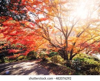 Blur Abstract Autumn background in Mifuneyama Rakuen Garden, Saga, Japan