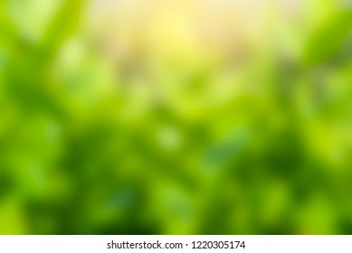 Blur abstract green leaves background.The color of leaves and sunlight for the background and report presentation and web design