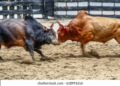 Blur action the fighting game of the bull in southern Nakhon Si Thammarat of Thailand