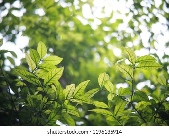 blur background from variety of green plant leaves shallow depth of field under shiny sunlight and environment in nature outdoor for relax mood backdrop and background