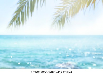 Blur beautiful nature green palm leaf on tropical beach with bokeh sun light wave abstract background