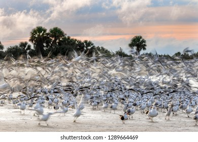 Blur of birds rising from a Gulf of Mexico beach at dawn - Florida