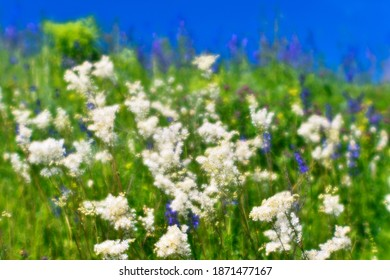 Blur. Blooming meadow close-up with white and purple flowers in bright green grass against a blue clear sky. Selective focus. Background.