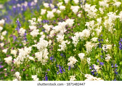 Blur. Blooming meadow close-up with white and purple flowers in bright green grass. Selective focus. Background.