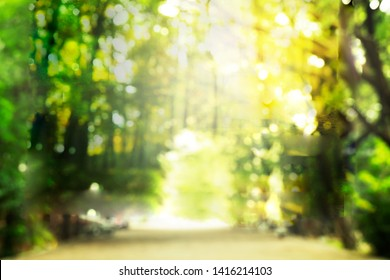 blur bokeh summer light orange green tree forest abstract nature background