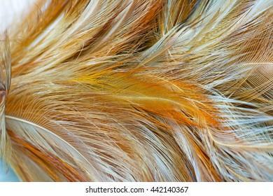Blur brown chicken feather abstract texture vintage background