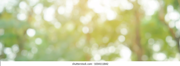 blur clean green nature forest in panoramic horizontal background with bokeh glow flare light