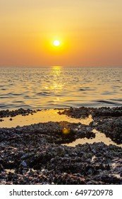 a blur colorful sunset background with shell on the rock closeup, abstract nature