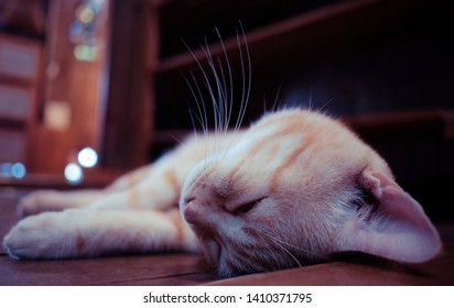 blur cute white cat sleep, take a rest on wood floor on background home and bokeh for using background and wallapaper