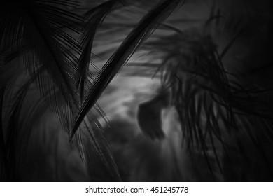 blur feather dark black background