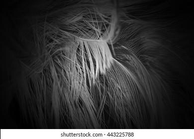 blur feather wool dark black background