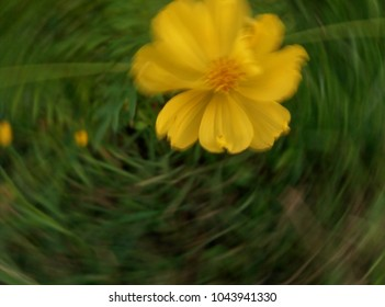 blur flower yellow background