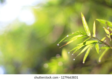 blur green bamboo leaf with sunlight