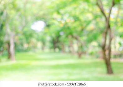 blur green bokeh lush garden park outdoor in nature abstract background.