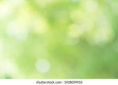 Blur green bokeh nature background