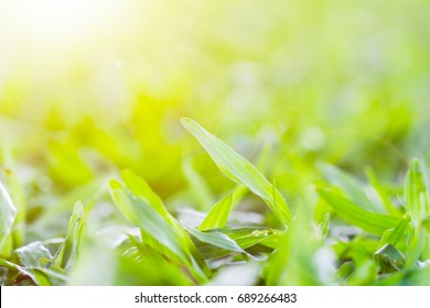 blur of green grass in the park with warm sunlight during the short time before sunset.