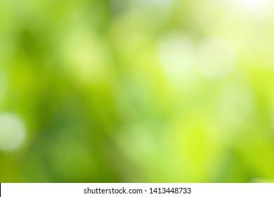 blur green leaf background in nature