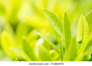 Blur green leaf with text space for nature background concept.