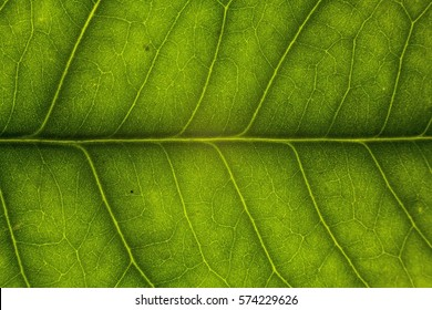 Blur green leaf texture for background indicating love for mother nature and pollution free