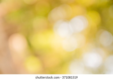 Blur green leaves with bokeh, abstract background