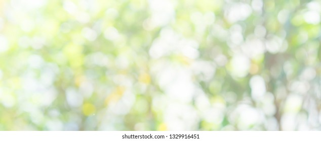 blur green leaves of tree at home botanical gardening in panoramic horizontal background with bokeh glow flare and sunlight , clean environment ecology concept