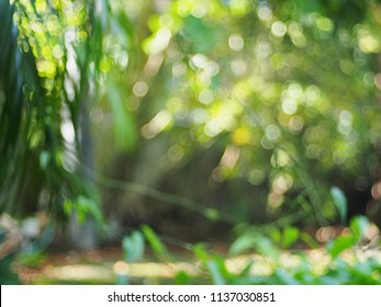 blur green leaves of tropical plant trees out of focus defocused under shiny sunlight in garden outdoor for use as natural relax mood backdrop background