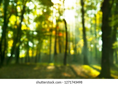 blur green summer season natural forest bokeh sunlight nature background