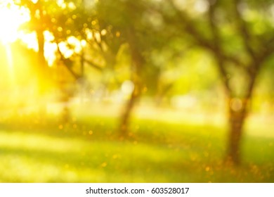 blur green tree abstract in garden or park summer with orange sun light background
