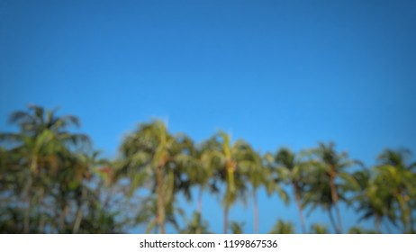 blur image of palm tree over beautiful tropic skyblue at the beach in Malaysia