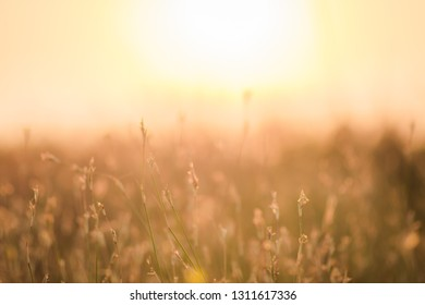 blur of meadow at sunset for background.