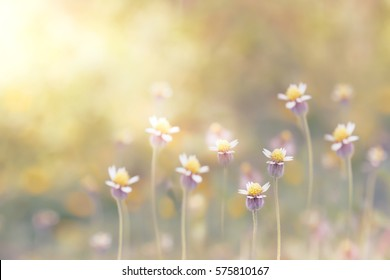 Blur Mexican daisy or Coatbuttons flower in nature for background, vintage filter
