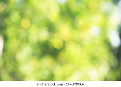 Blur natural and light background in the park. Abstract blur image of Green garden on day time with bokeh for background usage. Bokeh light yellow green abstract backgrounds textures.