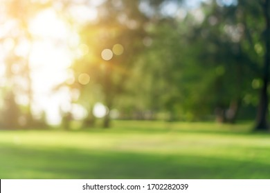 Blur nature bokeh green park by beach and tropical coconut trees in sunset time. - Shutterstock ID 1702282039