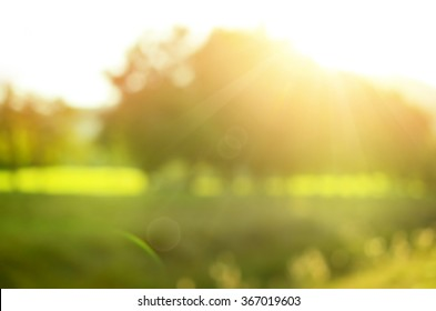Blur nature green park with sun light abstract background.