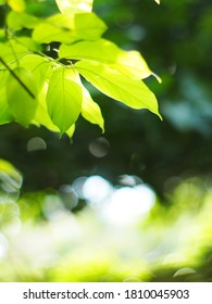 blur organic green plant leaves shallow depth of field under natural sunlight and dark environment in home garden outdoor for peaceful mood backdrop or background